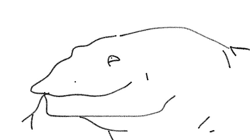 A Giant Komodo Dragon Doodle Ly